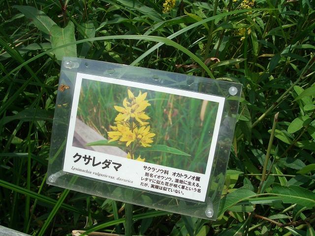 注目の「浮島ヶ原自然公園」を新人議員7名で視察!_f0141310_23322183.jpg