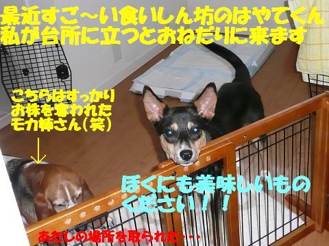 f0121712_168426.jpg