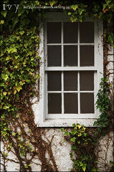 蔦のからまる窓_f0100215_1101094.jpg