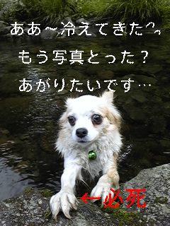 f0148927_1635579.jpg