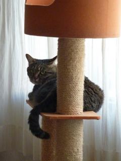 猫のお友だち たまくんsavaちゃん編。_a0143140_20464620.jpg