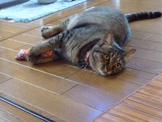猫のお友だち たまくんsavaちゃん編。_a0143140_20474869.jpg