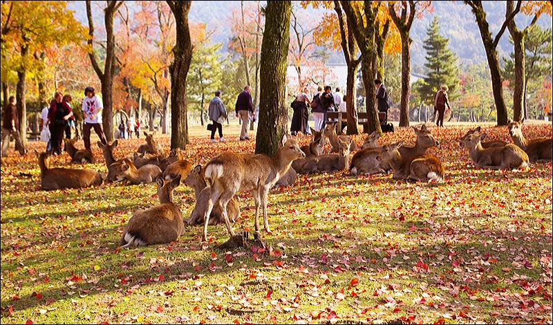 奈良之鹿_c0073742_15273.jpg