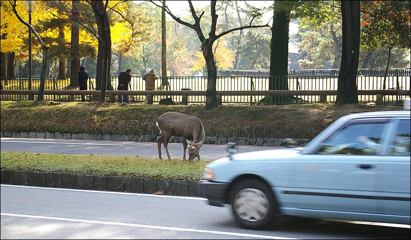奈良之鹿_c0073742_1535555.jpg