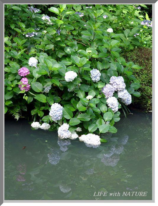 池畔に咲く_b0093088_7194183.jpg