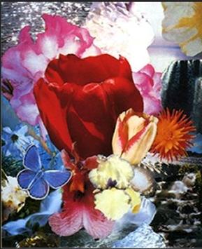 「世界で一つだけの花」? カップのエース Ecstasy_f0228000_8561361.jpg