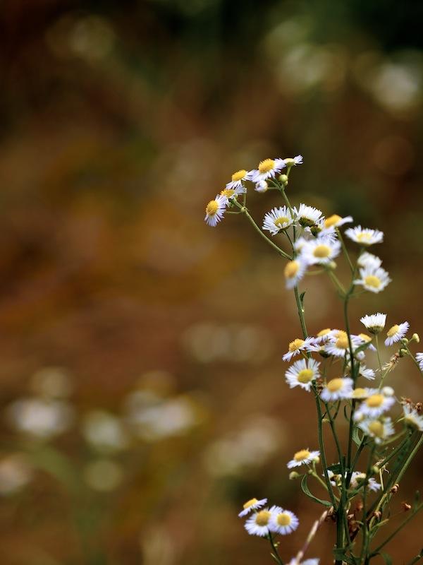 とにかく咲いて咲きまくる_a0037907_2124227.jpg
