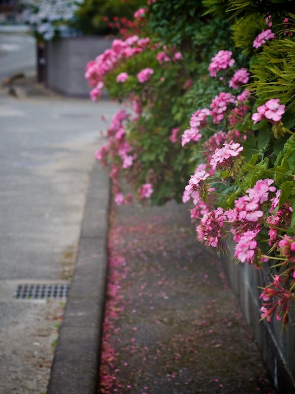 とにかく咲いて咲きまくる_a0037907_21252522.jpg