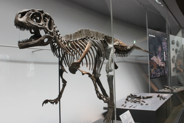 4日(日)の平成教育学院で恐竜特別授業開講!_f0229508_14415027.jpg