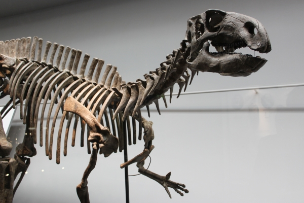 4日(日)の平成教育学院で恐竜特別授業開講!_f0229508_1442513.jpg