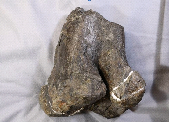 長崎での化石発掘にも協力しました!_f0229508_18658100.jpg