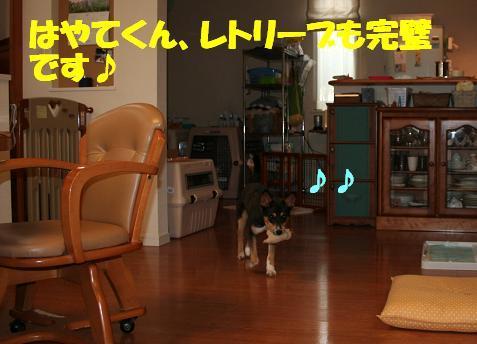 f0121712_17342960.jpg