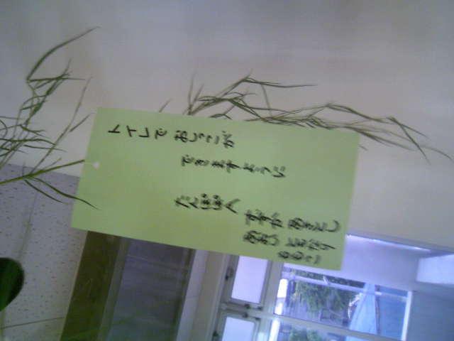 七夕ももうすぐね YUKARI_c0130623_18402631.jpg