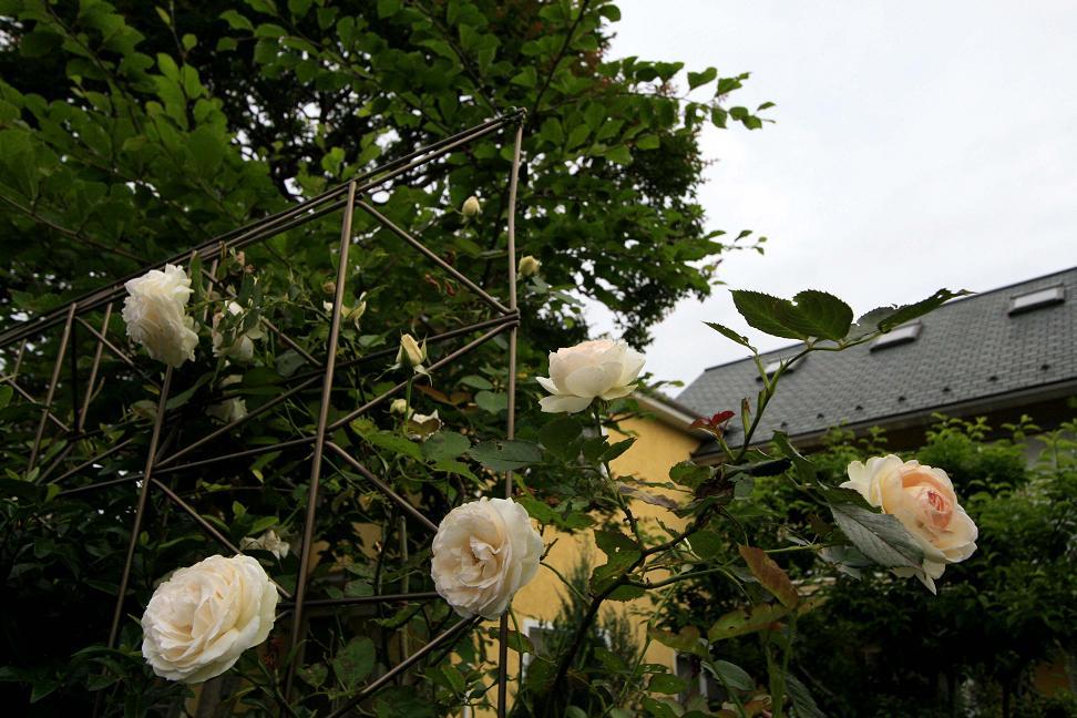 2週間前と昨日の庭 を比べると。。。_a0107574_619505.jpg