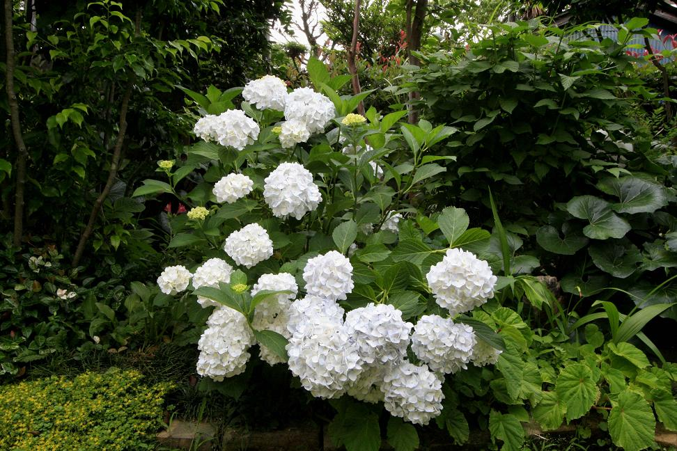2週間前と昨日の庭 を比べると。。。_a0107574_6201087.jpg