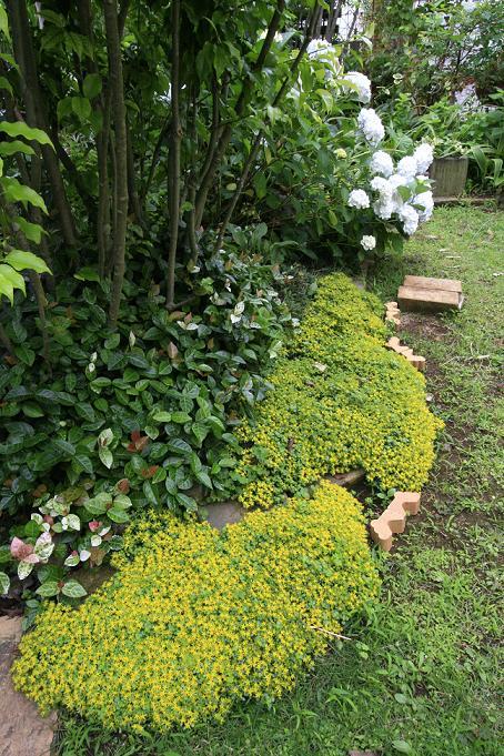 2週間前と昨日の庭 を比べると。。。_a0107574_620238.jpg