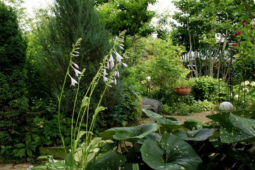 2週間前と昨日の庭 を比べると。。。_a0107574_6214127.jpg