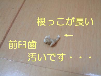 f0179203_1042305.jpg