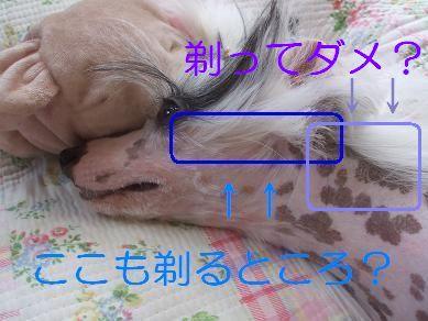 f0179203_1532580.jpg