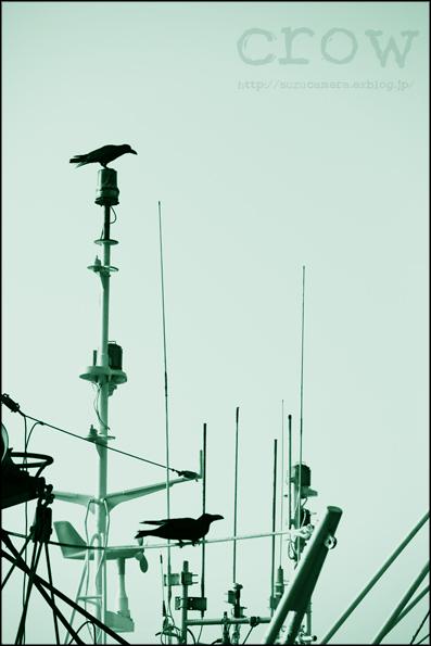 漁港のカラス_f0100215_2272812.jpg