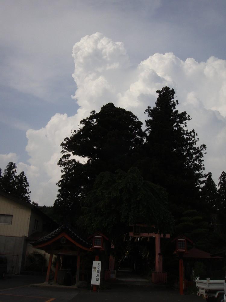 草集め_c0111229_198296.jpg