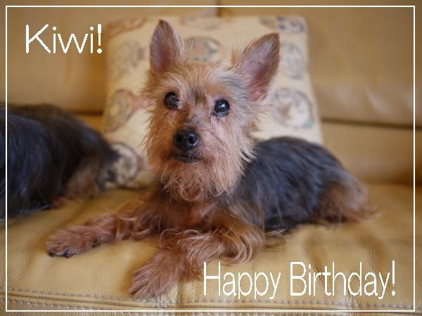 Kiwi、16歳になりました!_c0157047_17343446.jpg