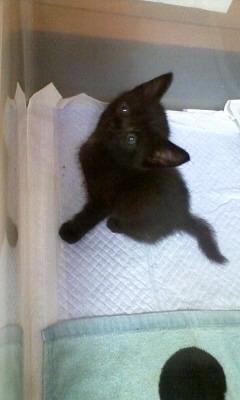子猫の里親になって下さい。_c0209659_18225214.jpg