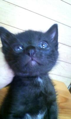子猫の里親になって下さい。_c0209659_18232721.jpg