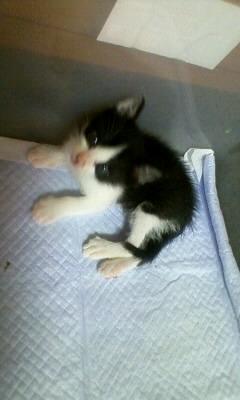 子猫の里親になって下さい。_c0209659_1833670.jpg