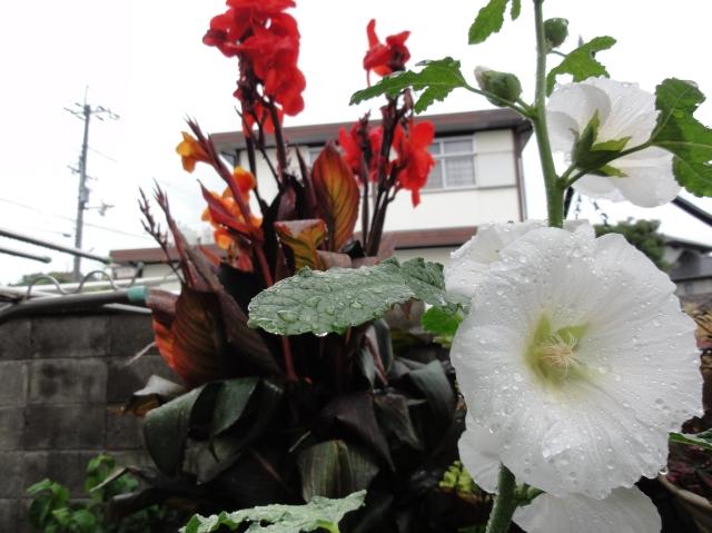 雨の日=パソコン漬け   by  (TATE-misaki)_c0108460_1594237.jpg