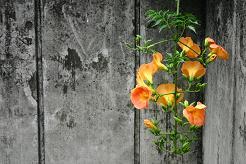 風街ろまん いい匂い 96  「ポジティヴシンキングな夏至」_c0121570_11473135.jpg