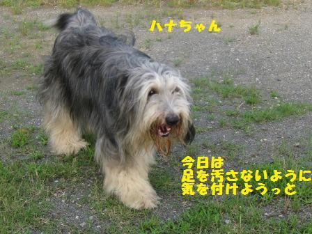f0230380_2203555.jpg