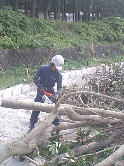 新島中学校樹木伐採工事 3_b0172896_10174732.jpg