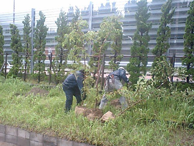 新島中学校樹木伐採工事 4_b0172896_17125886.jpg