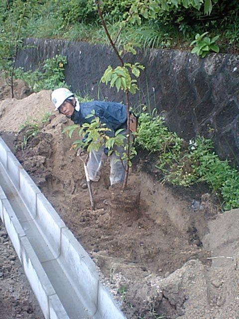 新島中学校樹木伐採工事 4_b0172896_17131468.jpg