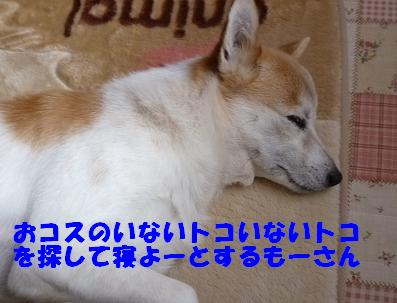 a0154801_195298.jpg