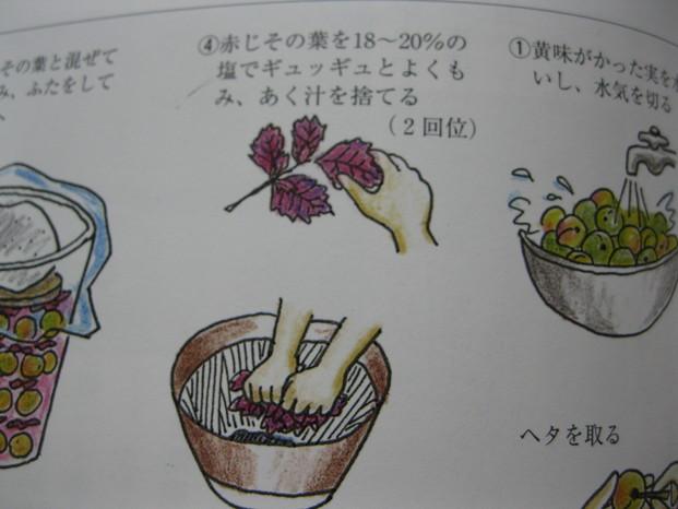 「赤紫蘇」を~~_a0125419_1356421.jpg