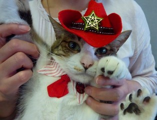 お誕生日猫 ぽー8歳猫。_a0143140_20242862.jpg