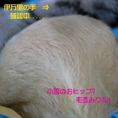 c0173670_1751087.jpg