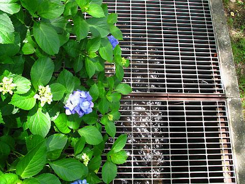 柴崎分水(立川分水)(2)昭和記念公園〜奥多摩街道まで_c0163001_023543.jpg