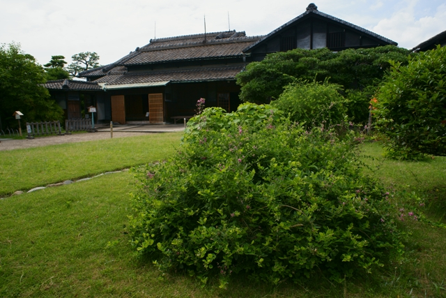 旧西尾家住宅の夏萩 (前)_e0177413_14595538.jpg