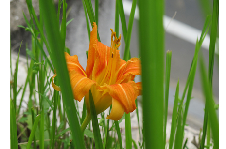 事務所に咲く 花 〜初夏〜_a0131025_2159578.jpg