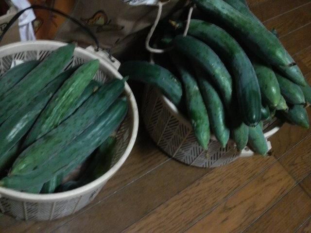 夏野菜の季節_b0100432_959326.jpg