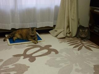 猫のお友だち ちぃちゃんあずきちゃんちょびくんまろくん編。_a0143140_21321715.jpg