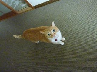 猫のお友だち ちぃちゃんあずきちゃんちょびくんまろくん編。_a0143140_21372292.jpg