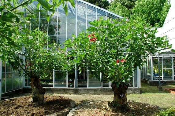 和歌山県植物公園緑花センター _b0093754_23522799.jpg