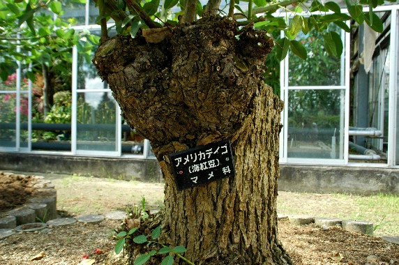 和歌山県植物公園緑花センター _b0093754_23524390.jpg
