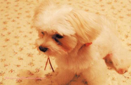 アンジェリーナのポストカード☆_c0130854_1455592.jpg