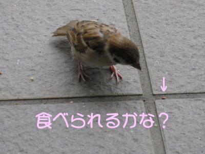 b0158061_2044976.jpg