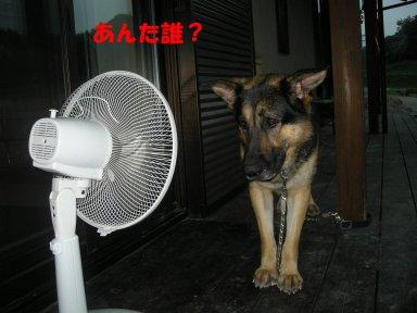 b0113663_8213734.jpg